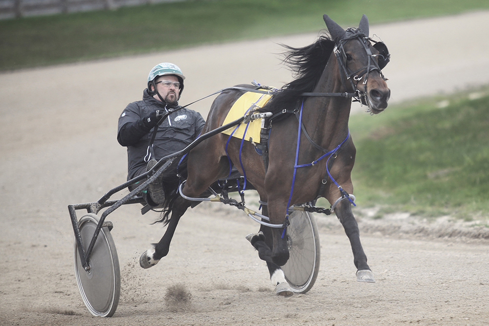 Jason McGinnis driving horse