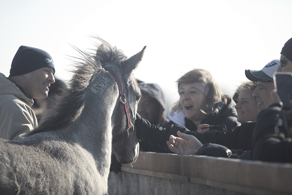 people meeting a horse